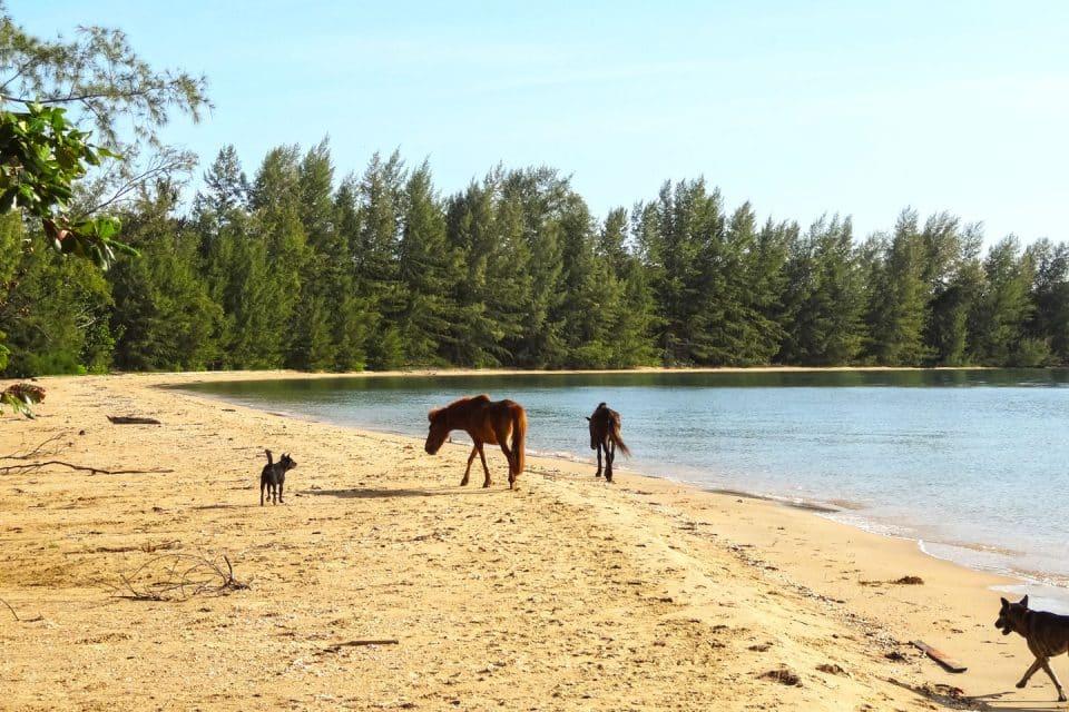 cambodia-beach-koh-Thmei