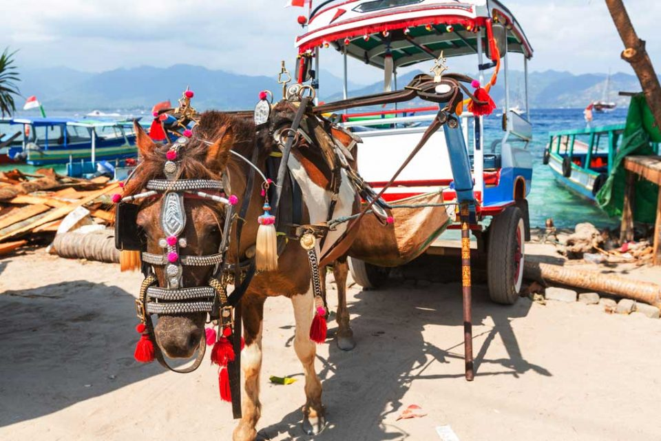 gili-island-horses