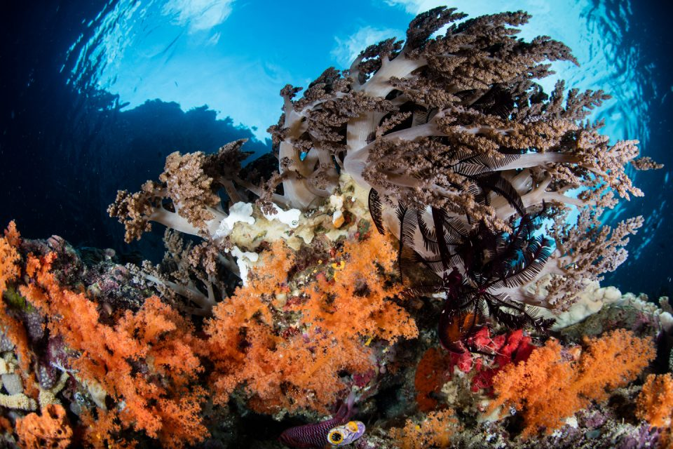 indo-reef