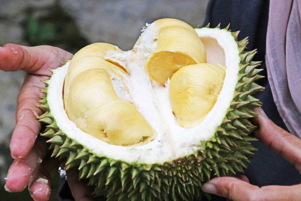 jakarta durian