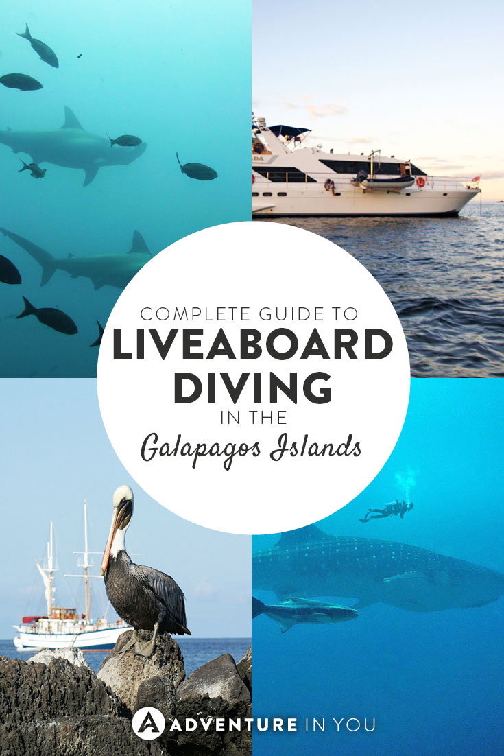 Want to go diving in the Galapagos Islands? Here are the best liveaboard diving experiences