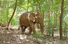 mondulkiri-elephants