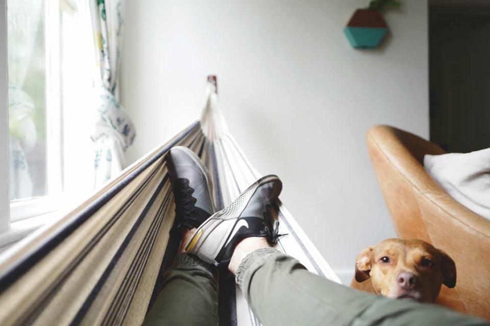 pet sitting sharing economy