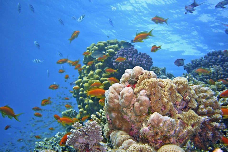 philippines-liveaboard-corals