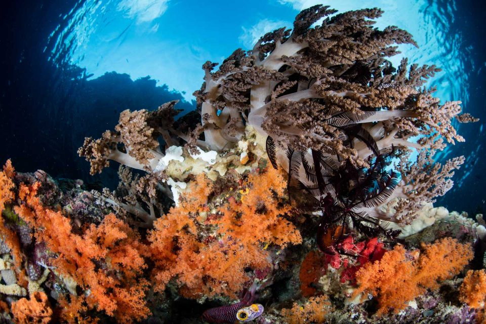 sumatra-diving