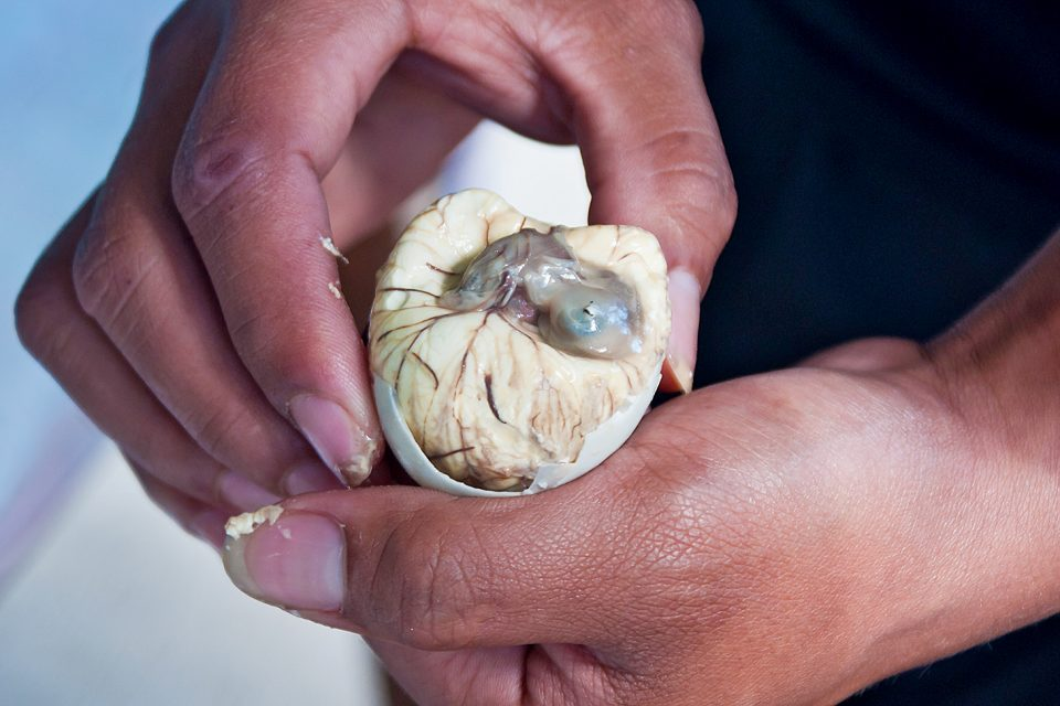 A duck embryo