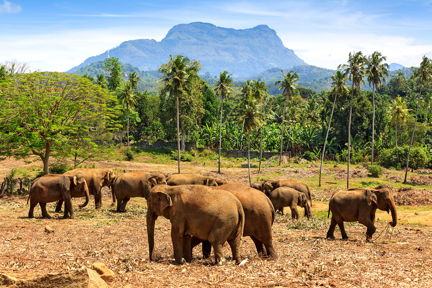 Elephants in Pinawella national park, Sri Lanka