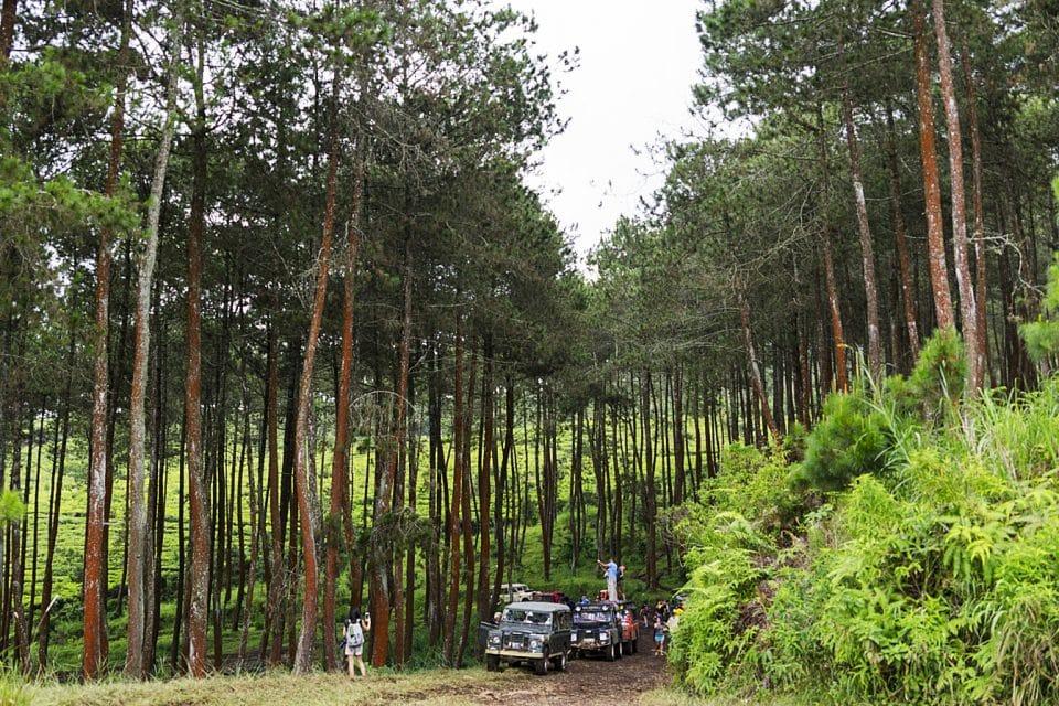 4WD off-raod Bandung Indonesia - Trees