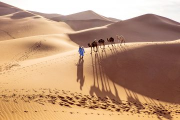 Two guys walk camels across desert