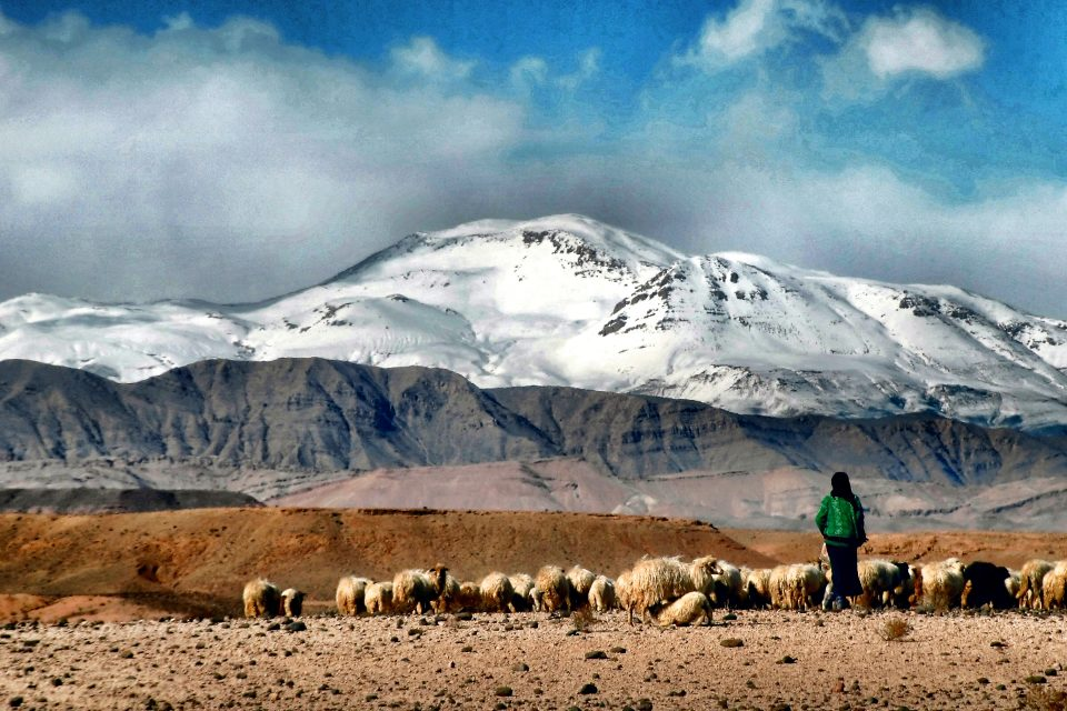 Female nomad with herd in Morocco