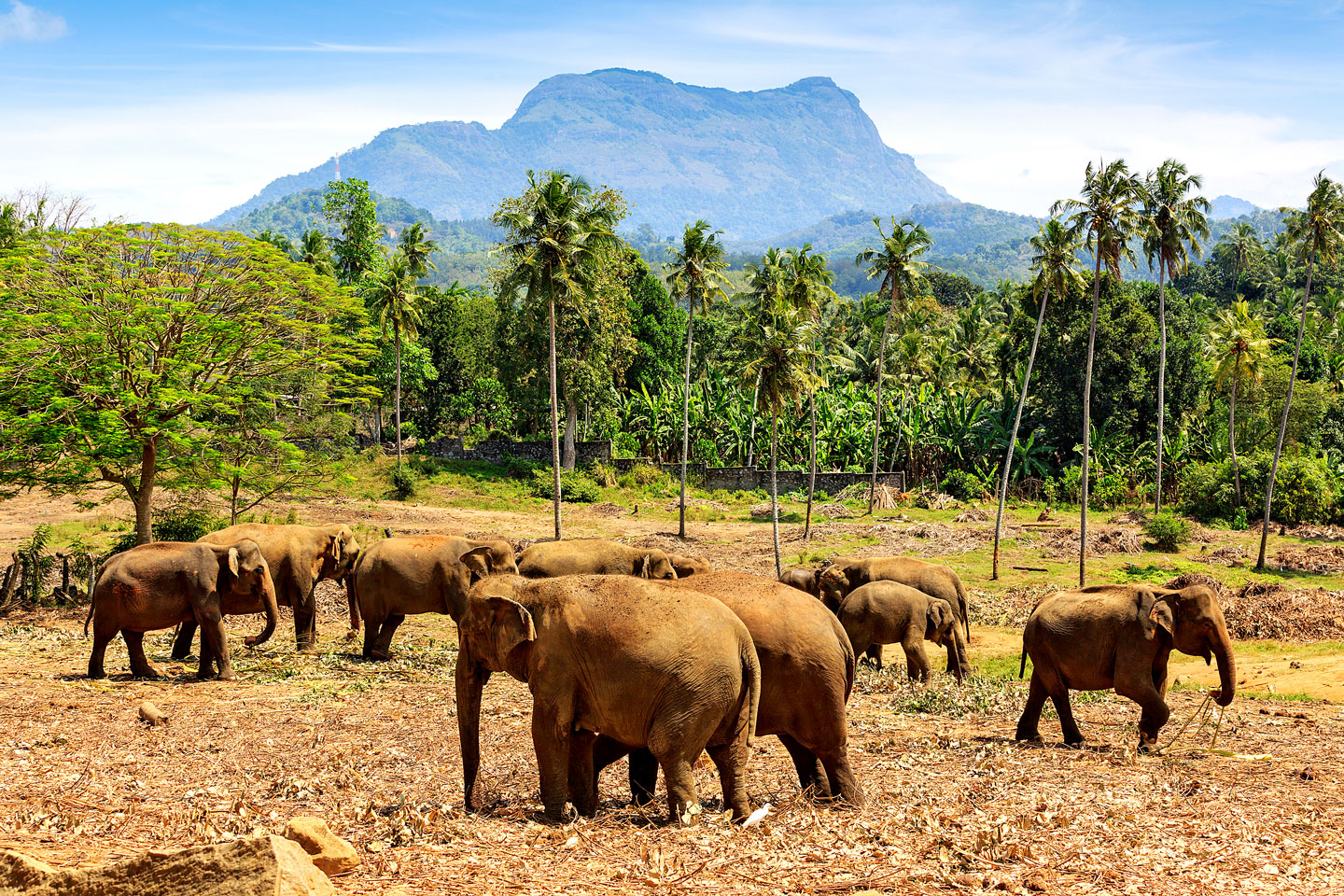 best-adventures-sri-lanka-wildlife