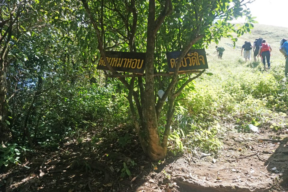 Dog-Panting-Trail thailand
