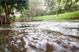 Baan Sujipuri Stream