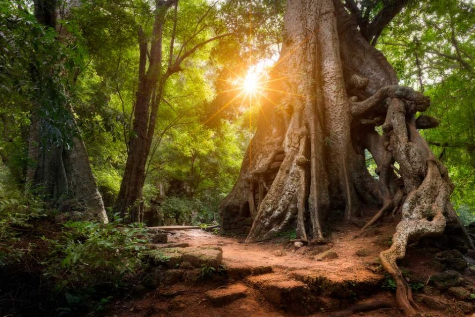 cambodia-trekking-national-park