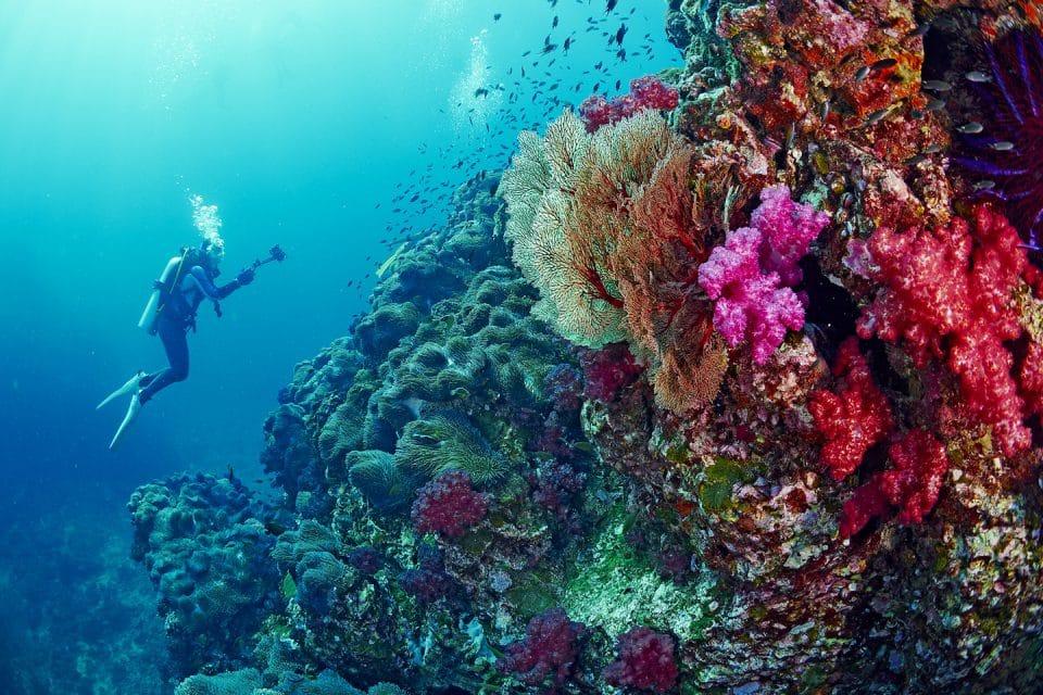 similan islands diving liveaboards