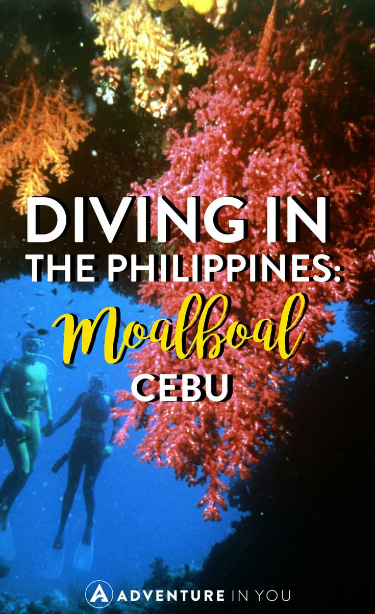 Philippines Diving | Looking for good spots to go diving while in the Philippines? Check out Moalboal, Cebu. A beautiful spot in the South, this dive site features a wide variety of things to see underwater. Read through our article on everything you need to know about diving in Moalboal Cebu #philippines #cebu #diving