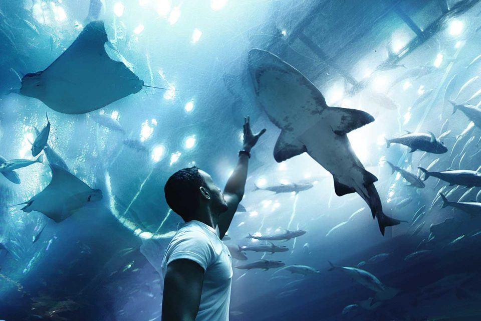 dubai aquarium filled with sharks