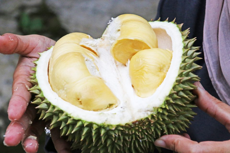 Durian fruit asia