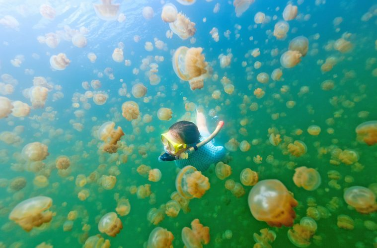 jellyfish-lake-palau-diving