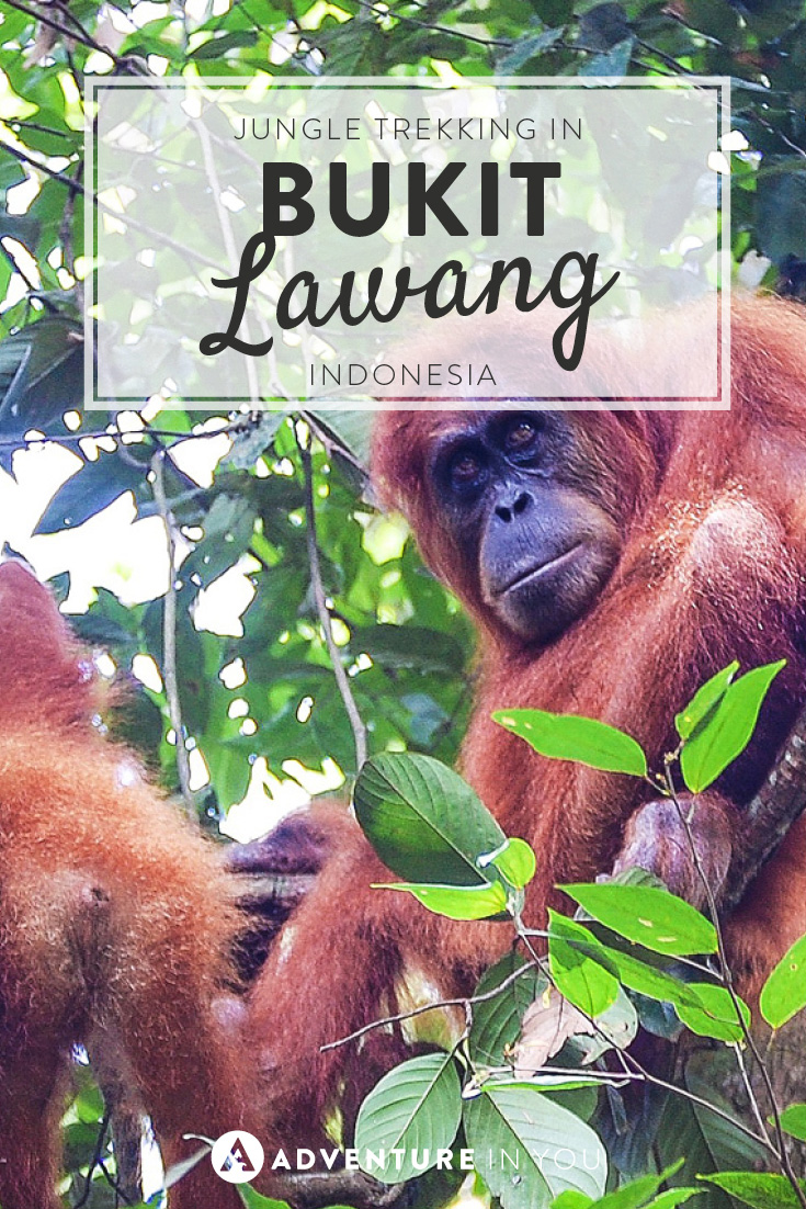 Head on over to Sumatra and enjoy jungle trekking in Bukit Lawang, Indonesia