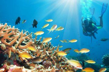 komodo-diving