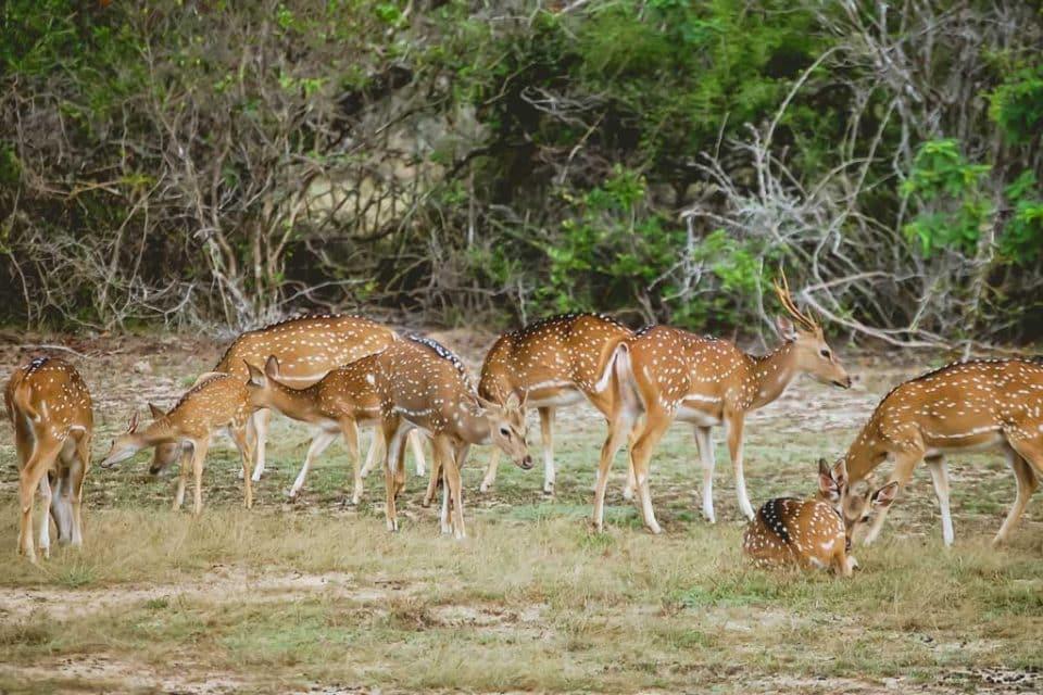 leopard-trails-deer