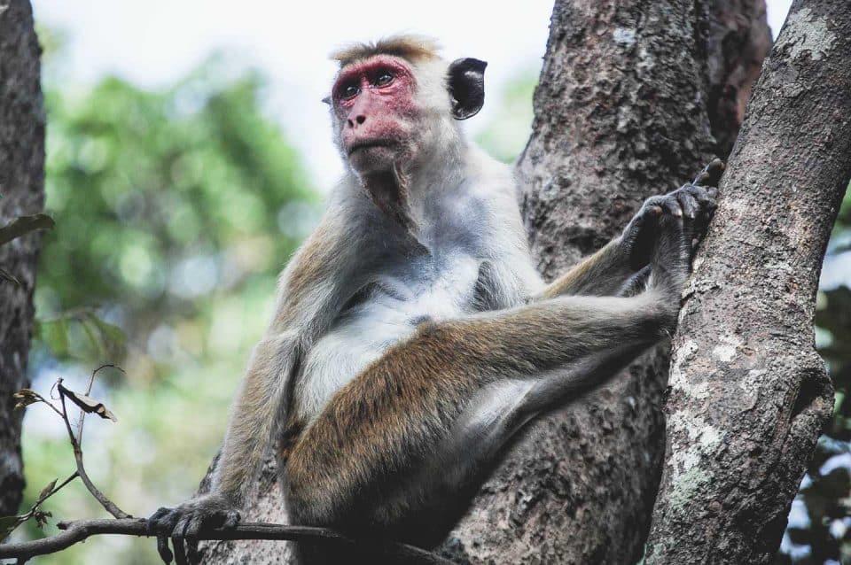 leopard-trails-monkey2