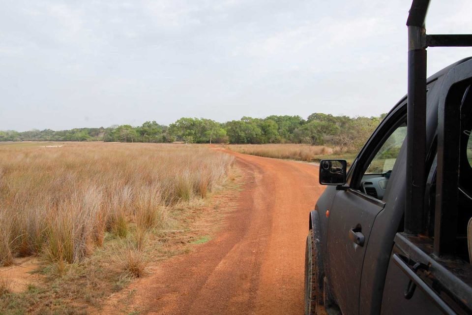 leopard-trails-safari