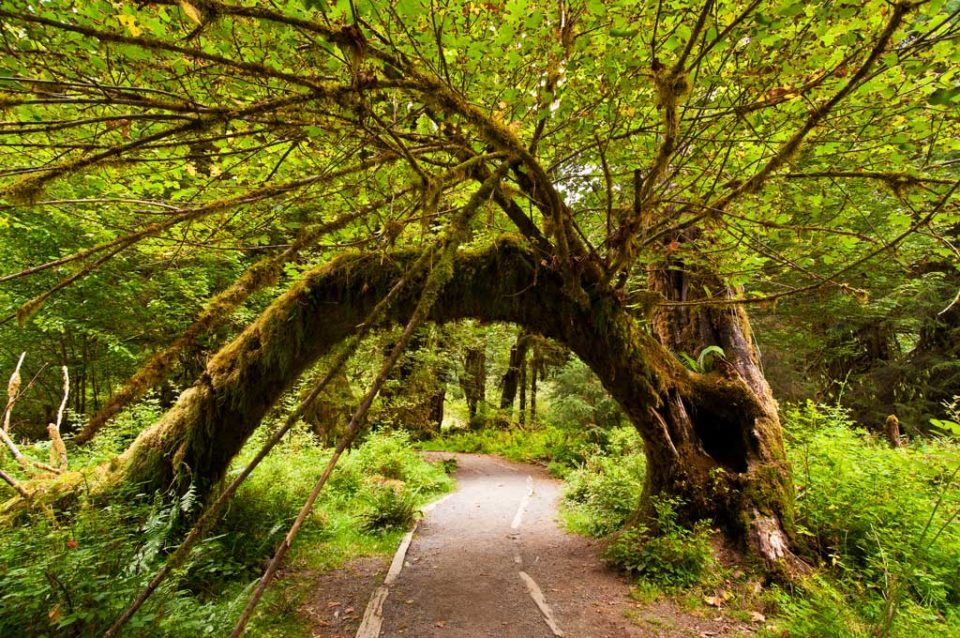 olympic-national-park