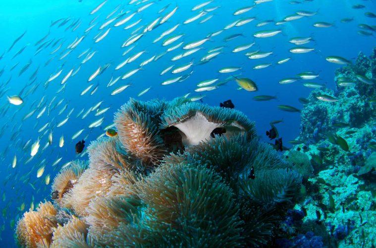 philippines-livaboard-corals