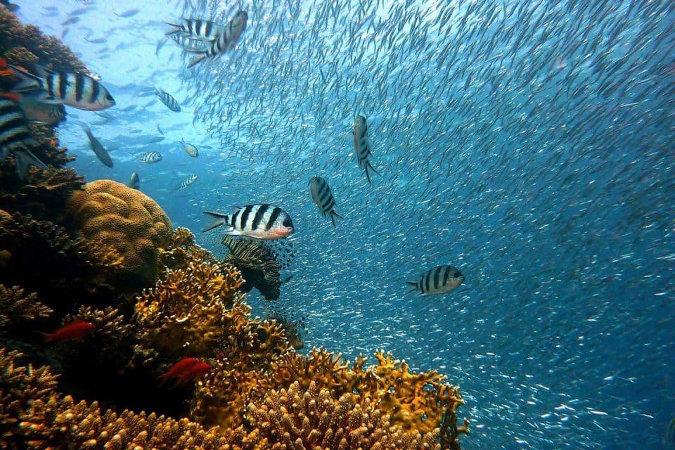 philippines-liveaboard-fish