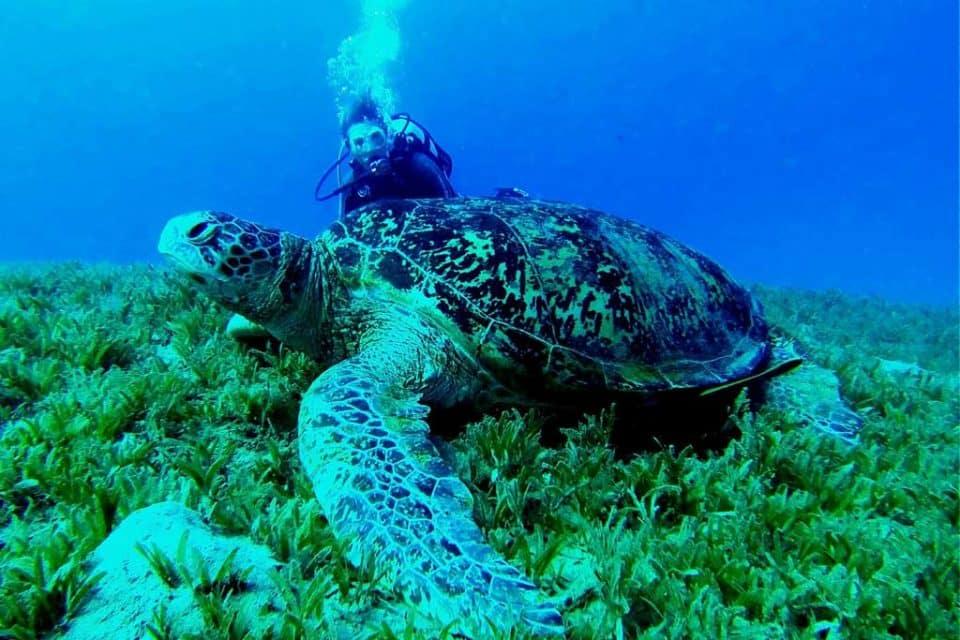 philippines-liveaboard-turtle
