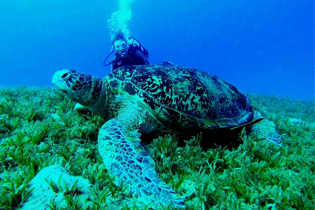 philippines-liveaboard-turtle