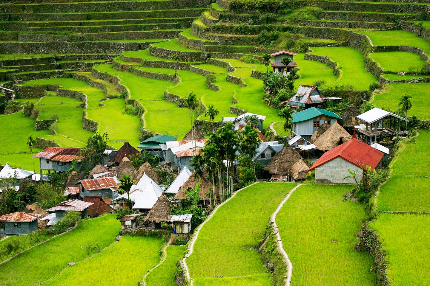 Philippines rice fields