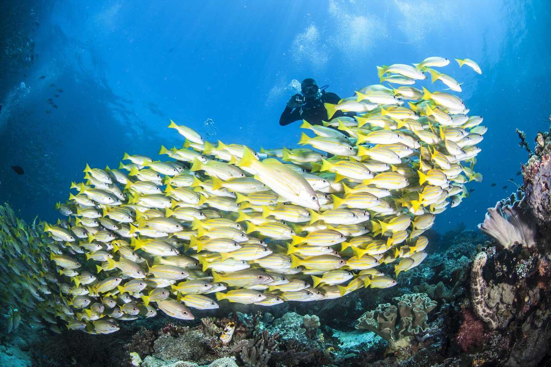 raja-ampat-diving