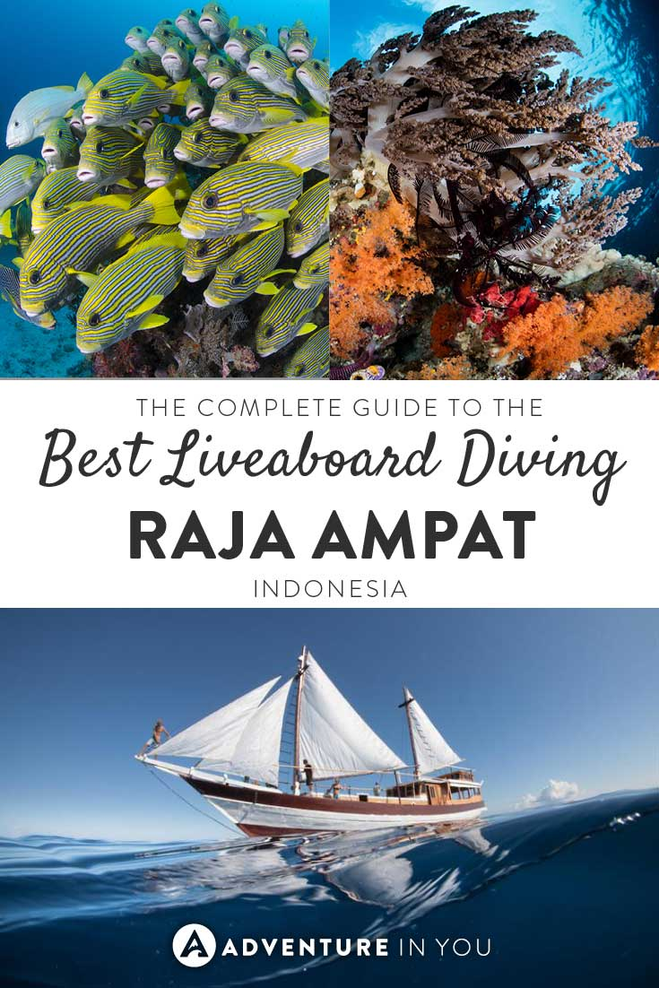Planning a liveaboard trip to Raja Ampat Indonesia? Check out this complete guide written to help you choose the best liveaboard boat for you.