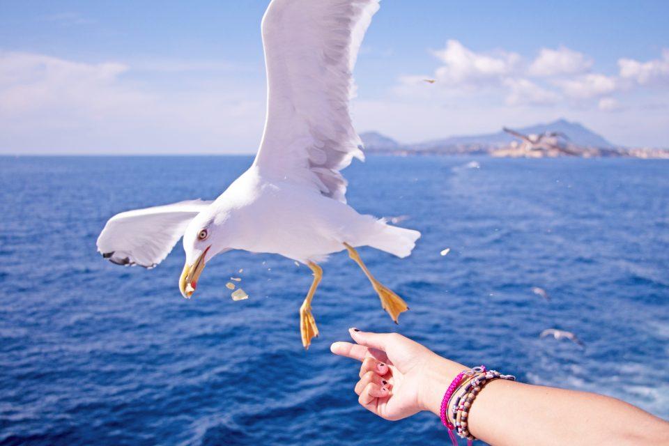 sailing seagul bird