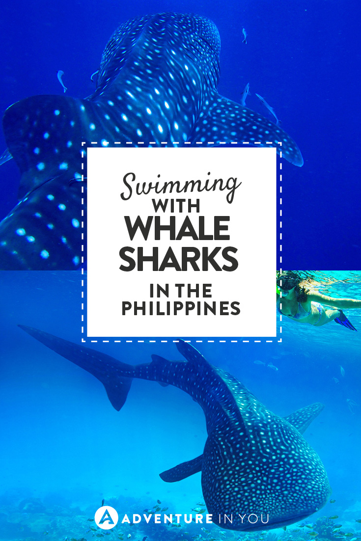 Planning a trip to the Philippines? Is swimming with whalesharks part of your itinerary?