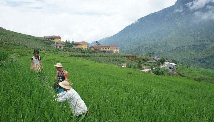 living locals homestay sapa vietnam