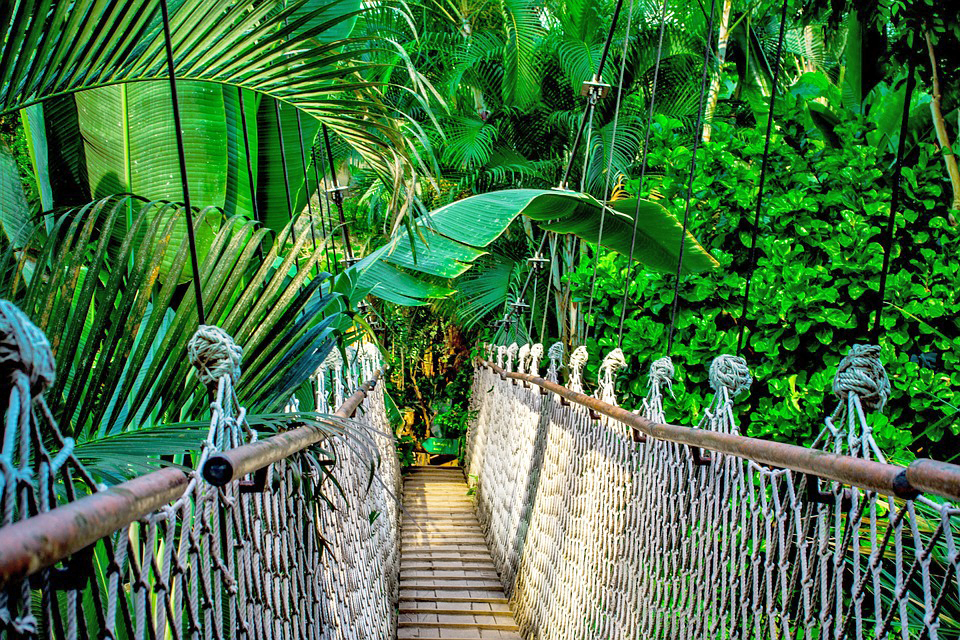 jungle green bridge