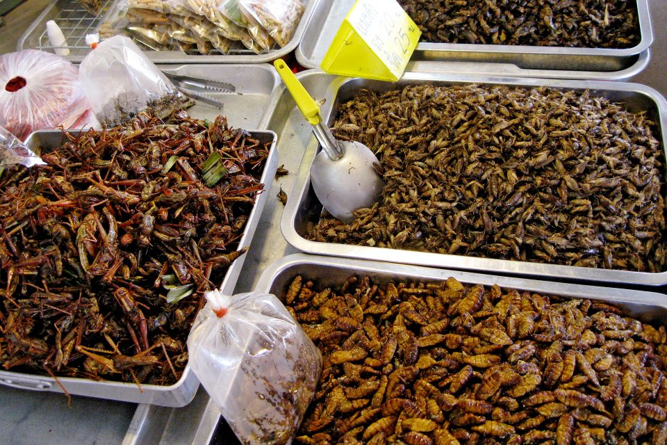 Fried bugs at a street food stall
