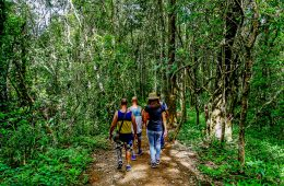 A group of people trekking through the forest