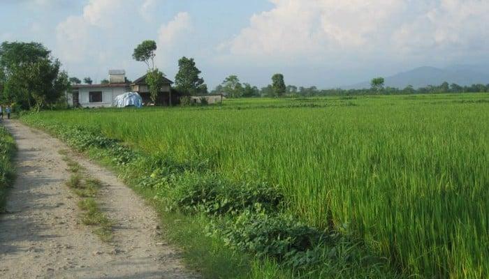 gawai nepal