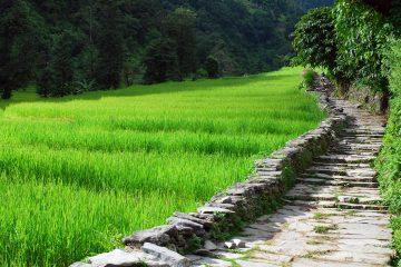 nepal fields asia