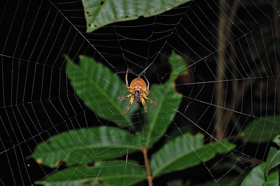 A spider on it's web
