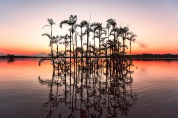 Palm trees and their reflections