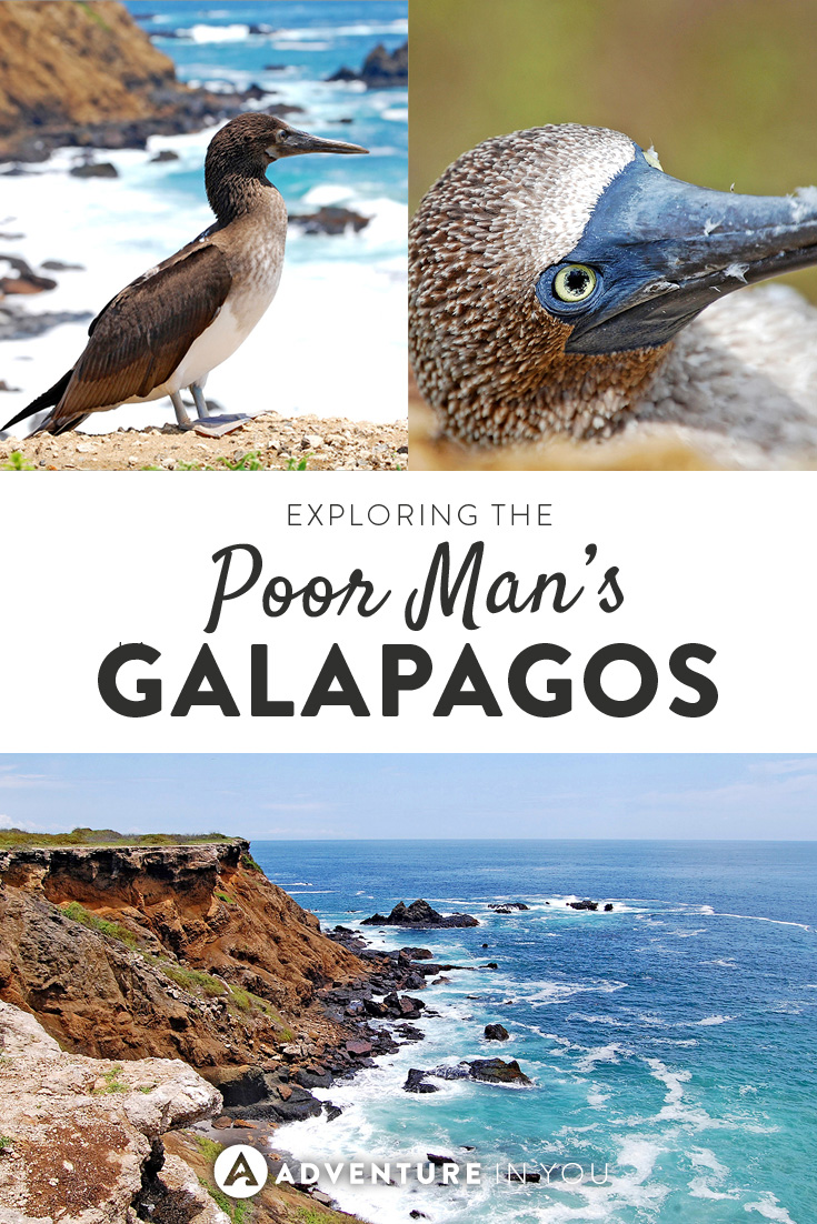 Are the Galapagos Islands out of your budget? Check out Isla de la Plata instead, otherwise known as the Poor Man's Galapagos