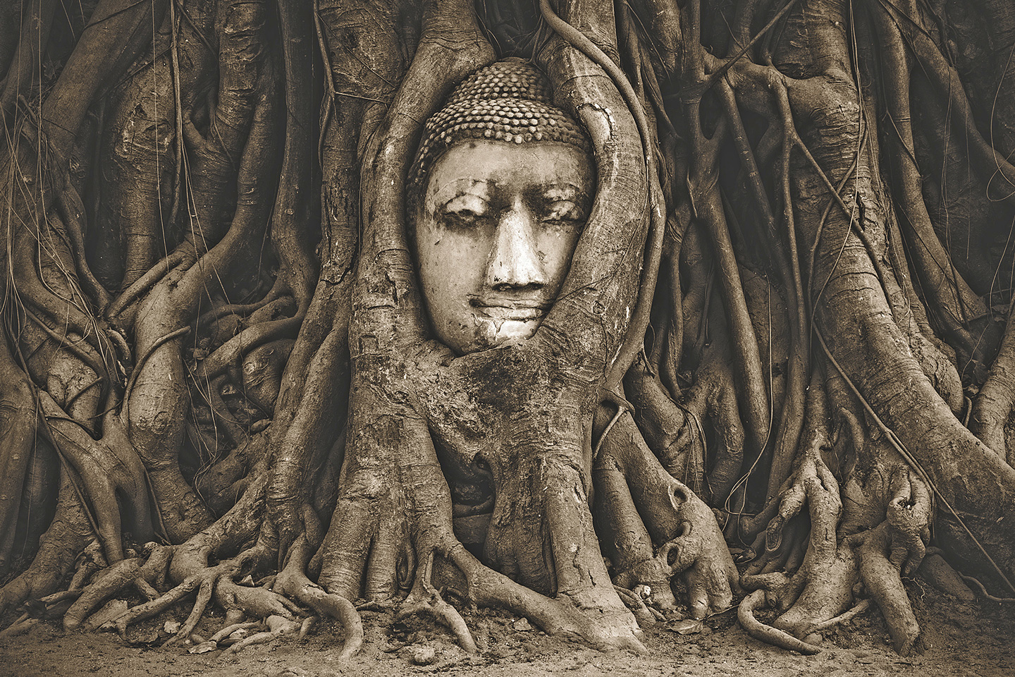 Buddha face between mangrove roots