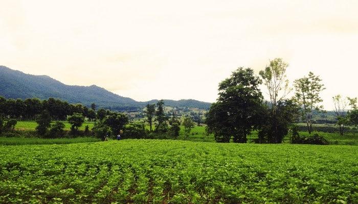 pai scenery