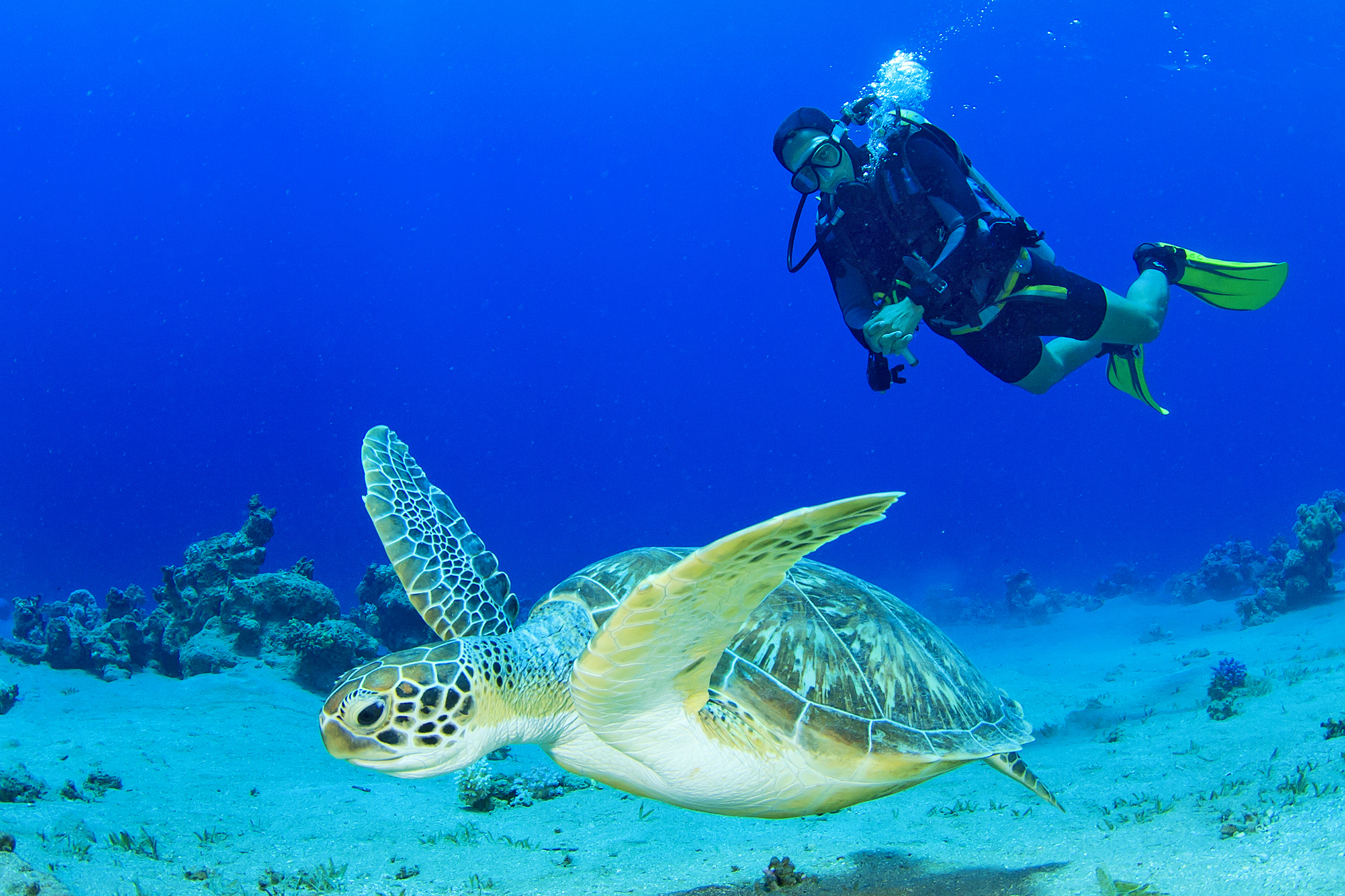 A diver swims next to a turtle